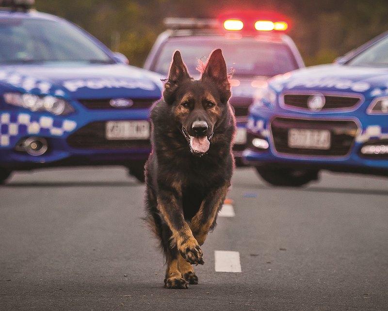 Best-Dog-Breeds-3-German-Shepherd-Dog