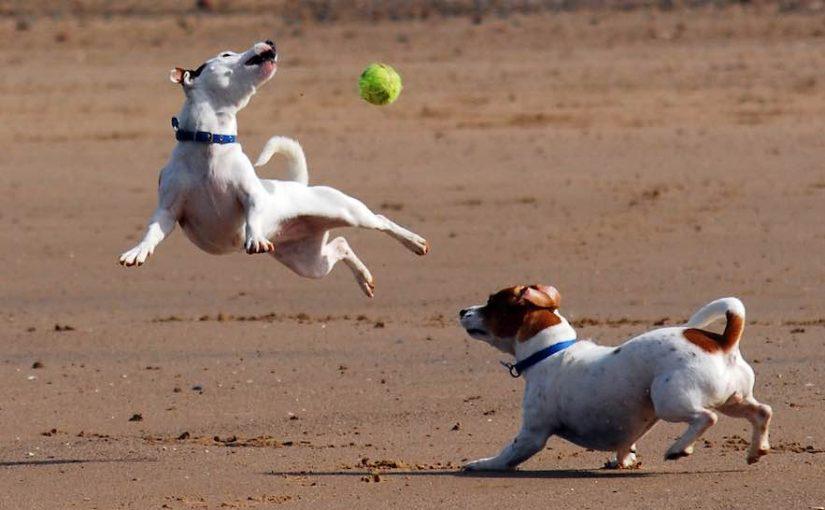 Terriers list of terrier dog breeds