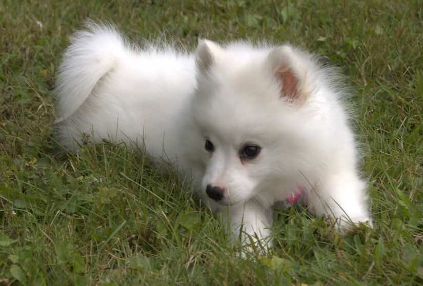 Small Dog Breeds List Of All Small Dogs Small Hypoallergenic Dog