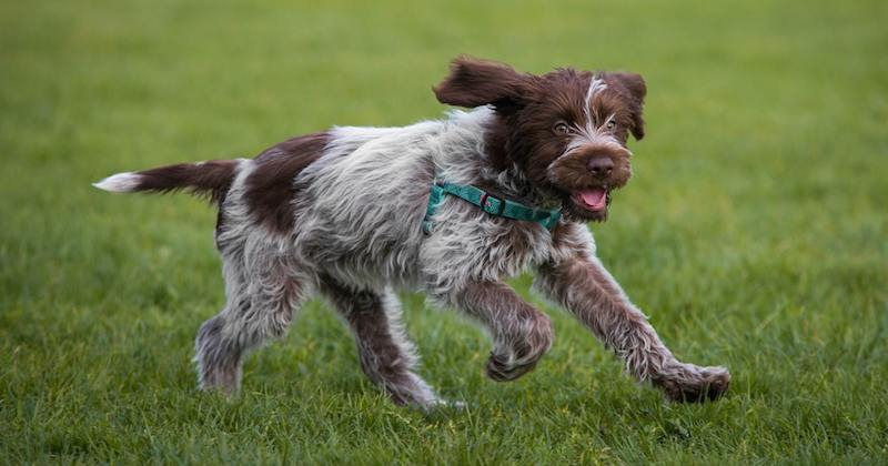 Sporting Dogs - List of all sporting dog breeds - K9 ...