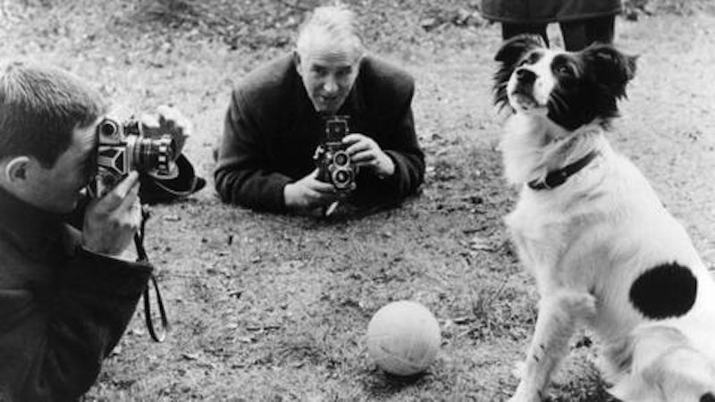 The dog who found the world cup