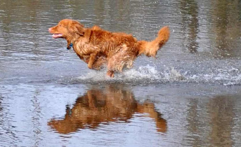 Water dog breeds list