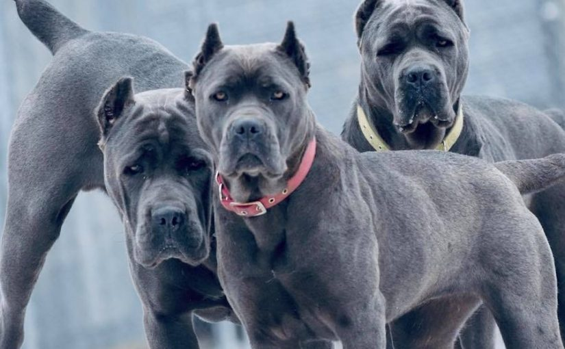 Most Banned Dog Breeds