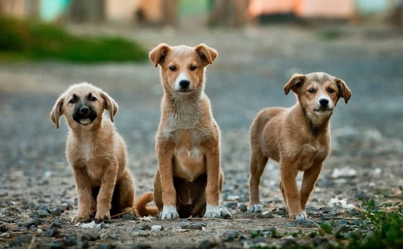 Feeding Stray Street Dogs FAQs